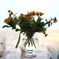 Последние цветы осени на моем окне. :: Инна Щелокова