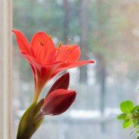 А за окном дождь со снегом.. :: Подъяков Анатолий