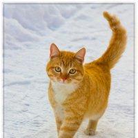 Прогулка по белому снегу :: Александр