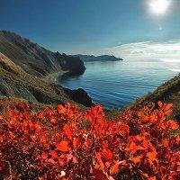 Алеют листья скумпии в осенним свете на фоне моря :: viton
