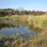 Осень на пруду :: анатолий томас