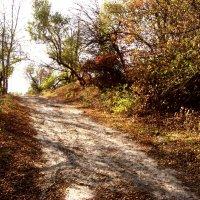 Осень :: анатолий томас