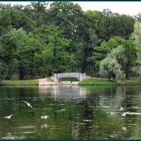 Гатчинский парк :: Наталья