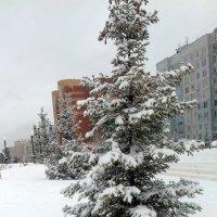 Снежные ёлки в городе . :: Мила Бовкун