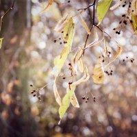 Осенние кружева. :: Инна Малявина