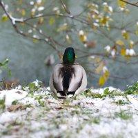 Зима пришла... :: Caba Nova