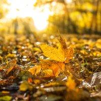Осень. :: Leo Belov