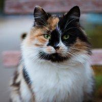 Кошка счастья :: Елена Неведицына