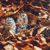 Просто осень на дворе... :: Александр Вивчарик