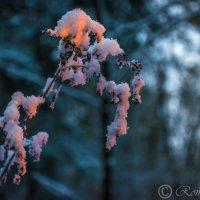 Первый снег :: Роман Воронежский