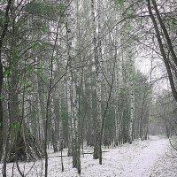 одинокая хижина :: натальябонд бондаренко