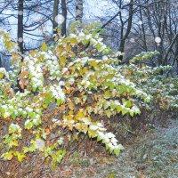 Первый снег :: Диана Задворкина