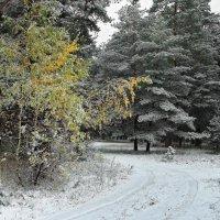 Зима наметив колею... :: Лесо-Вед (Баранов)