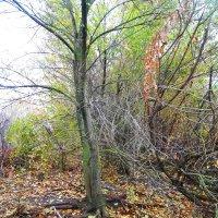 Кроет уж лист золотой.Влажную землю в лесу.Смело топчу я ногой.Вешнюю леса красу. :: Татьяна Королёва