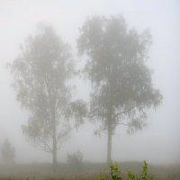 В густом тумане :: Юрий Спасенников