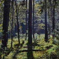 В лесу :: Татьяна Соловьева