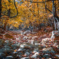Каменная река :: Sergey Bagach