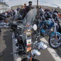 Harley Davidson в Питере :: Вячеслав Крапивин