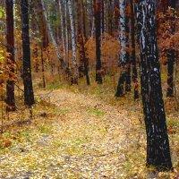 Осенние рябинки :: Александр Садовский