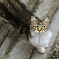 Кошка гуляет сама по себе.... :: владимир