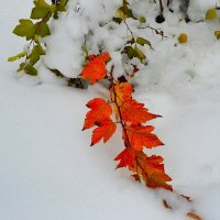 Ранняя зима в Смоленске :: Милешкин Владимир Алексеевич