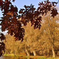 краски октября :: Елена