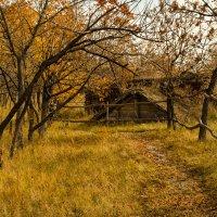 Осень в деревне :: Лариса Березуцкая