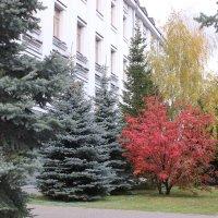 Осень в моём городе :: раиса Орловская