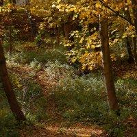 Осенний парк :: Dmitry Swanson