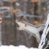 Ну долго мне ореха ждать? :: Alex Bush