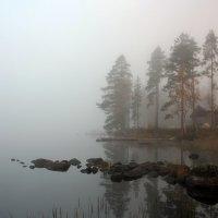 Туманное утро :: Ольга Саранцева