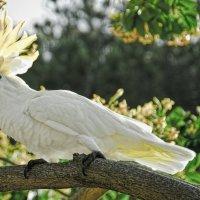 Белый попугай :: Alexander Dementev