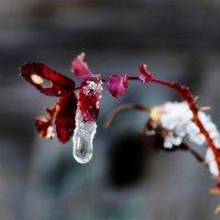Плакала осень, встречая зиму. :: Андрей Скорняков
