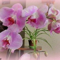 Орхидея :: Нина Бутко