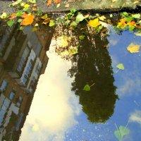 Полное погружение в осень. :: Люда Валяшки