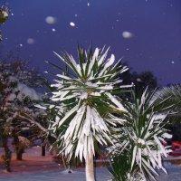 Пальмы под снегом. :: Оля Богданович