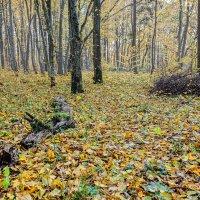 Тихая осень :: Владимир Самсонов