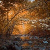 в глубине леса :: Sergey Bagach