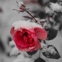 Прекрасна ты и в день ненастный..... :: Tatiana Markova