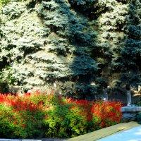 Костёр в осеннем парке... :: Тамара (st.tamara)