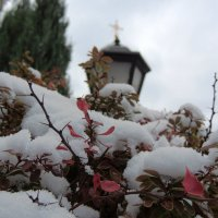 И снегом запорошена листва. :: Елена Ом