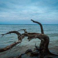 Про мертвые деревья :: Artem Zelenyuk