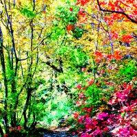 Сказочный лес :: Chrisstern Lynnik