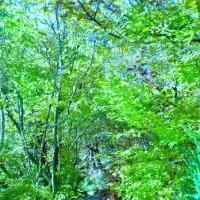 Сказочный лес. :: Chrisstern Lynnik