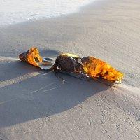 осенний морской подарок... :: СветланаS ...