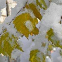 Первый снег :: Любовь Чумак