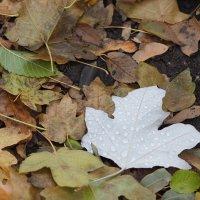 Осенний листок , он так одинок :: Игорь Касьяненко