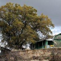 Дачный домик на берегу реки. :: Аnatoly Polyakov