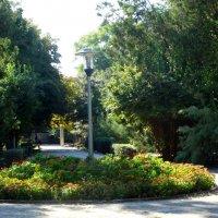 В осеннем парке... :: Тамара (st.tamara)