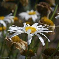Круговорот цветов в природе :: Василий Хорошев